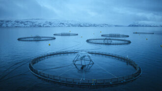 Explosive growth in value of Norwegian seafood exports in July