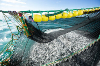 Large fall in seafood exports in November